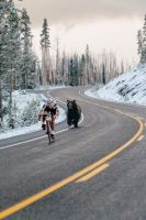 bear chase.jpg