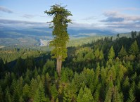 One Giant Tree.jpg