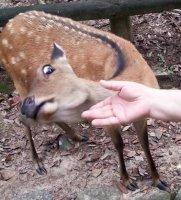fuck no deer.jpg