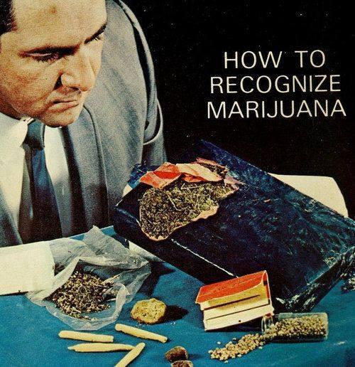 How To Recognize Marijuana.jpg