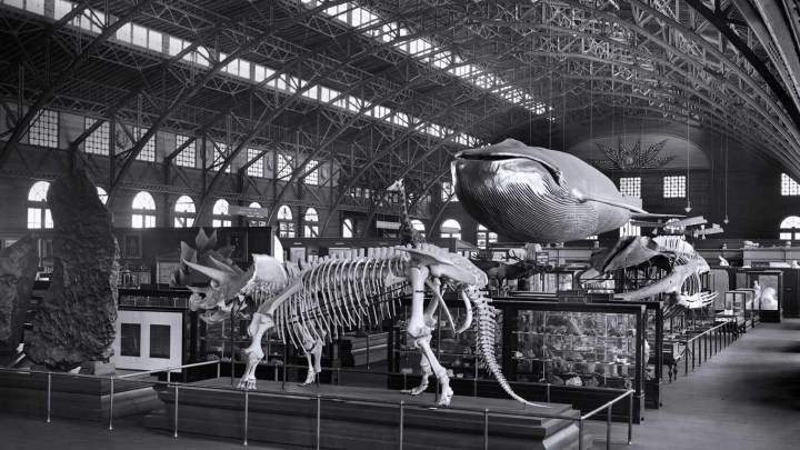 Smithsonian touring exhibition at the 1904 St. Louis Worlds Fai.jpg
