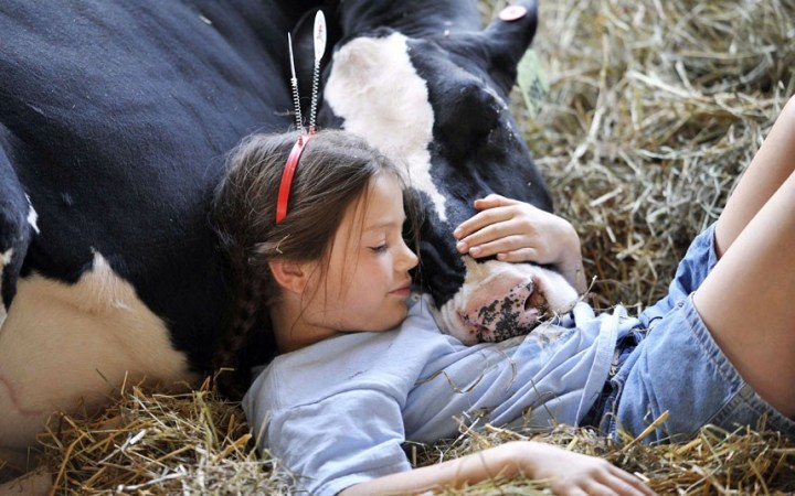 a girl and her cow.jpg