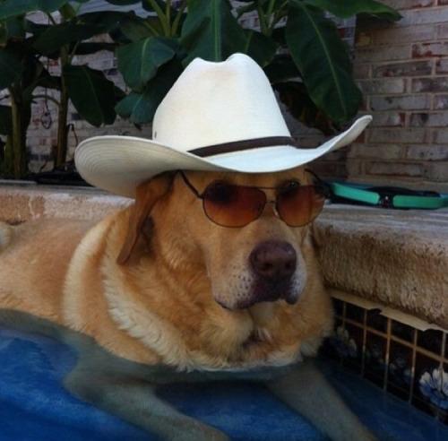 cowboy dog in the pool.jpg
