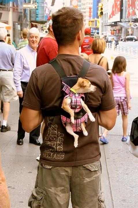Puppy Carrier.jpg