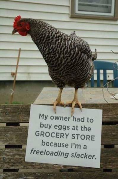 freeloading cock.jpg