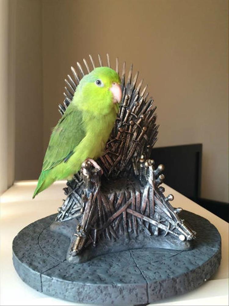 Iron Throne Bird
