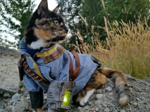 Fallout Cat
