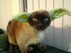Yoda Cat.jpg