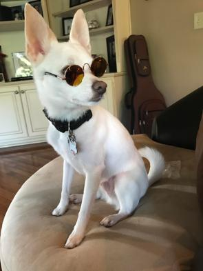 Seriously Cool Dog