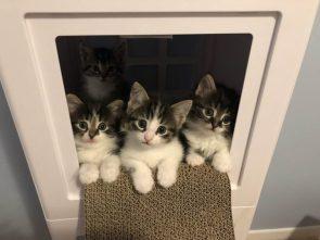 kitten box.jpg