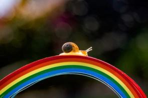 rainbow snail.jpg