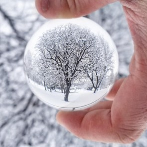 frozen tree globe.jpg