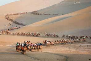 camel convoy.jpg