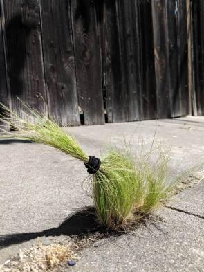 hair banded grass.jpg