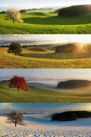One Tree Four Seasons