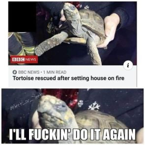 setting house on fire