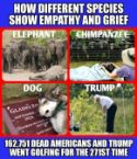 EMPATHY AND GRIEF