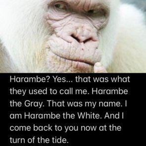 Harambe the White