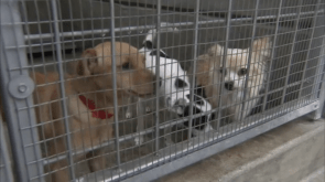 LA officially becomes 'no-kill' city as animal shelters achieve 90 save rate
