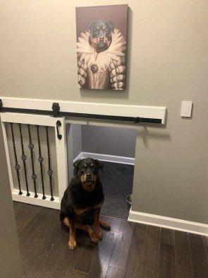 awesome dog room