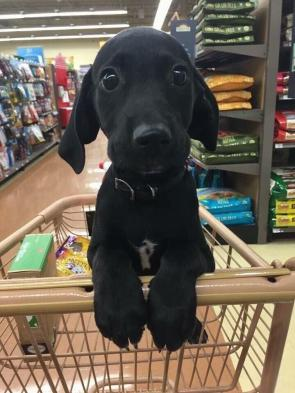 Guess you're about to buy every toy in the store
