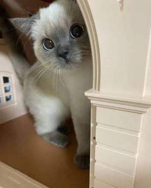 Hello may I help you