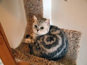 And ye shall be named… Cinnamon Roll