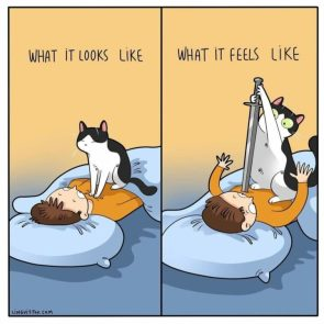 Cat owner can relate