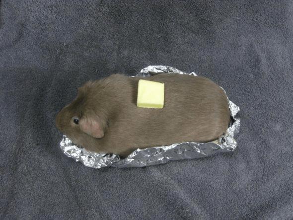 guinea.png (446 KB)