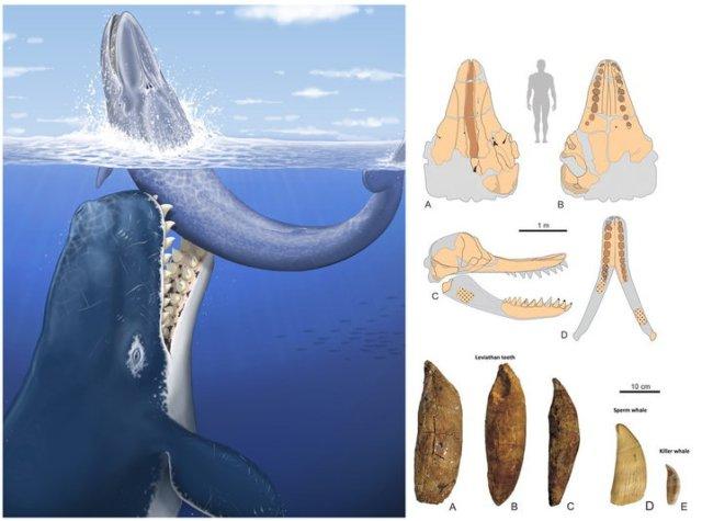 Livyatan-whale-312_n.jpg (64 KB)
