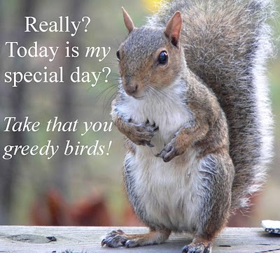 Funny-squirrel-appreciation-day.jpg (44 KB)