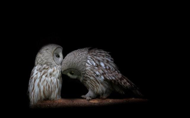 Two_owls.jpg (729 KB)