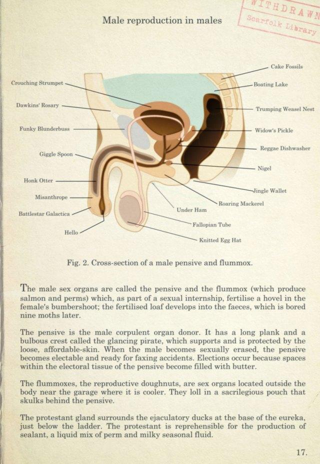male-anatomy.jpg (193 KB)