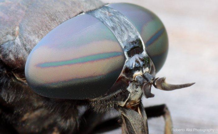 horsefly_eye.jpg (370 KB)