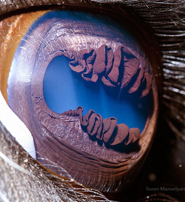 llama-close-up-of-eye-macro-suren-manvelyan.jpg (111 KB)
