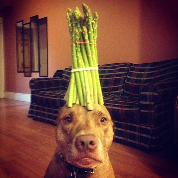 dog-daily-wtf-002-11262013.jpg (282 KB)
