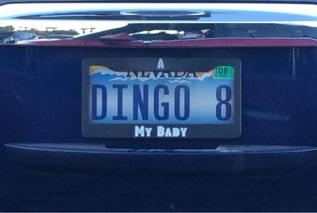 dingo-8.jpg (50 KB)