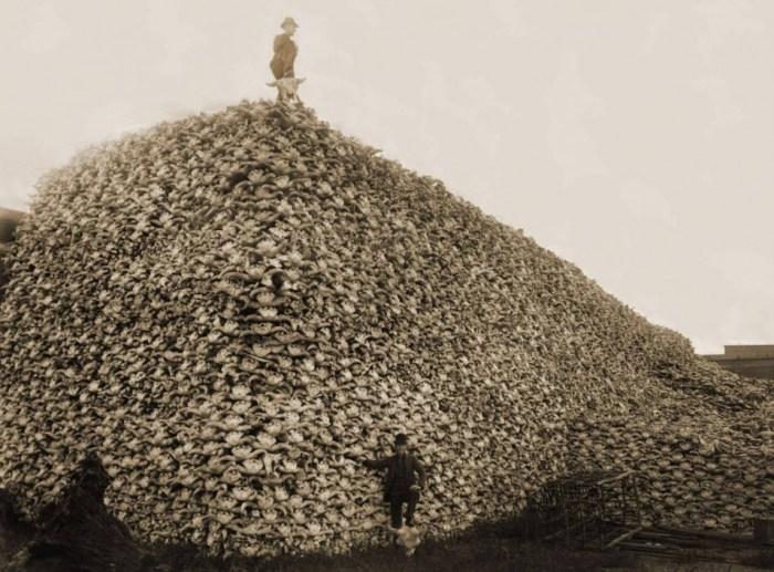 Buffalo-Skulls-1870.jpeg (201 KB)