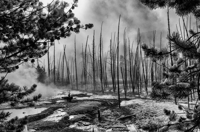 yellowstone-forest-bw-01.jpg (2 MB)