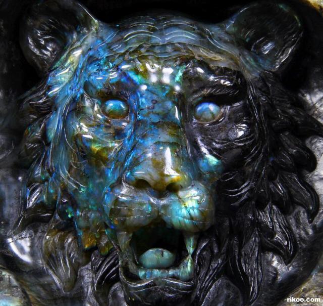 lion1.jpg (134 KB)