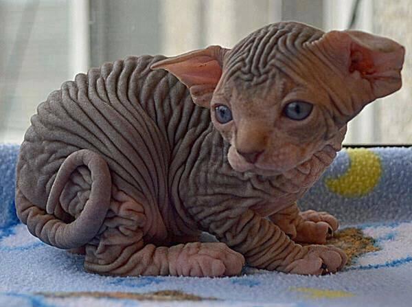 cat4.jpg (39 KB)
