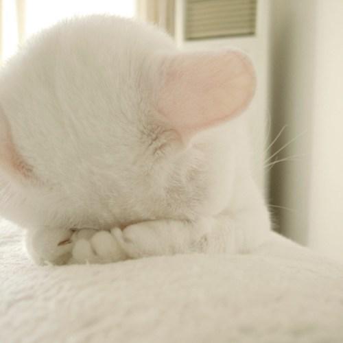 Cat1.jpg (48 KB)