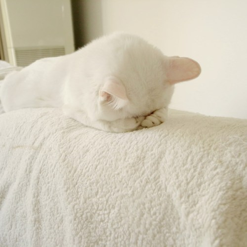 Cat2.jpg (71 KB)