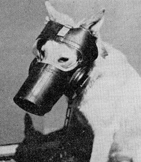 dog_gas_masks_15.jpg (41 KB)
