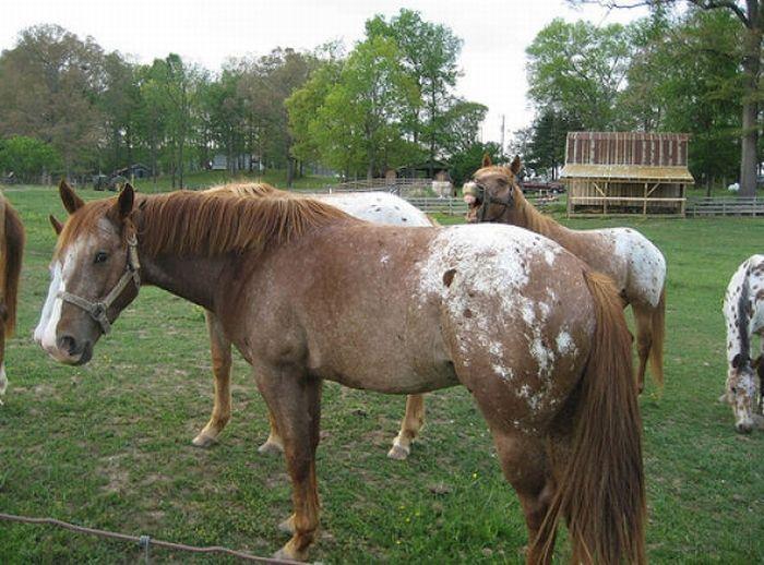 horse_photobombs_19.jpg (80 KB)