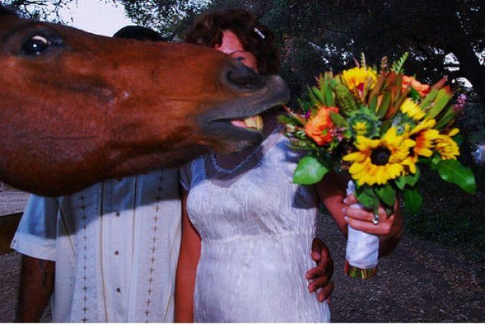 horse_photobombs_20.jpg (59 KB)