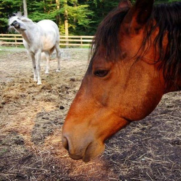 horse_photobombs_22.jpg (77 KB)