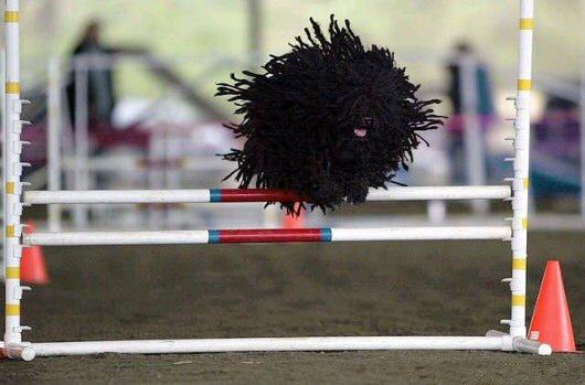 dog-jump.jpg (36 KB)