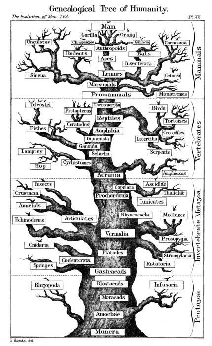 tree.jpg (592 KB)