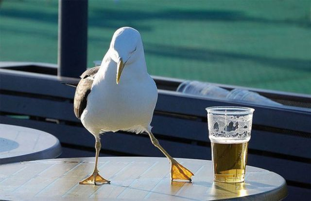seagull-and-beer-dance.jpg (33 KB)